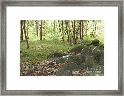 Iao Valley Forest Walk Framed Print