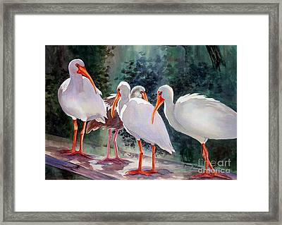 Ibis - Youngster Among Us. Framed Print