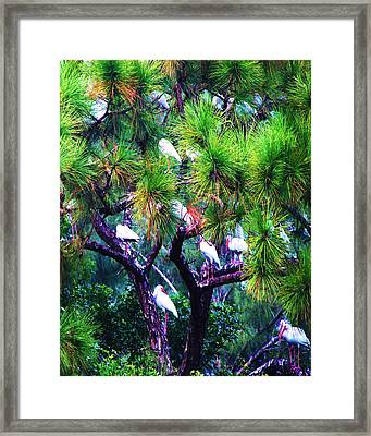 Ibis-gone To Roost-2 Framed Print