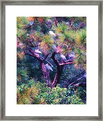 Ibis-gone To Roost Framed Print