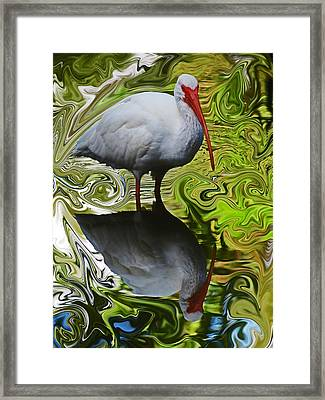 Ibis Swirl Framed Print