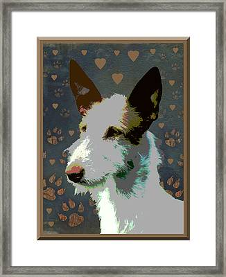 Ibizan Hound Framed Print by One Rude Dawg Orcutt
