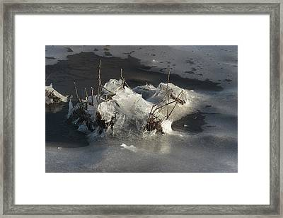 Ice And Salt Marsh Grasses Framed Print by George Grall