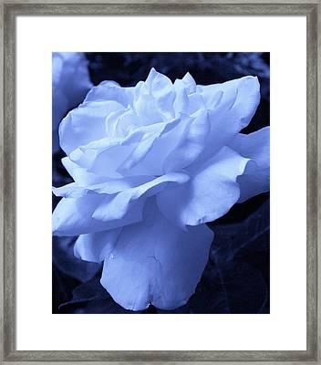 Ice Blue Rose Framed Print by Bruce Bley