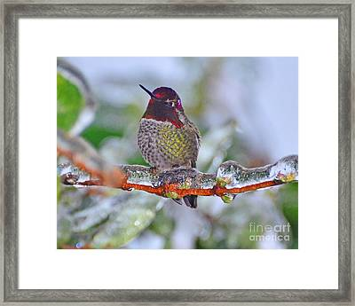 Framed Print featuring the photograph Ice Cold Hummer by Jack Moskovita