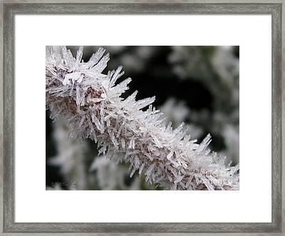 Ice Crystal Formation Along A Twig Framed Print