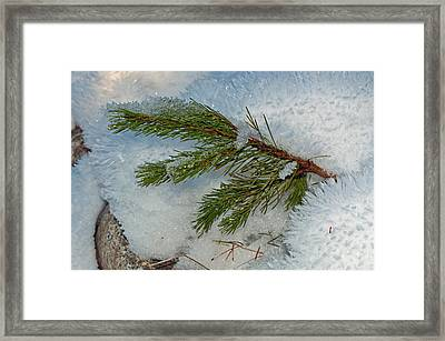 Framed Print featuring the photograph Ice Crystals And Pine Needles by Tikvah's Hope