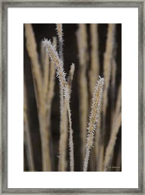 Framed Print featuring the photograph Ice Crystals On Tall Grass by Mick Anderson