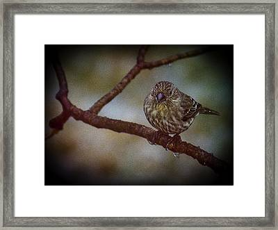 Ice Droplet Bird Framed Print