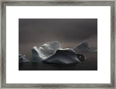 Icebergs In Fog, Quirpon Island Framed Print by John Sylvester