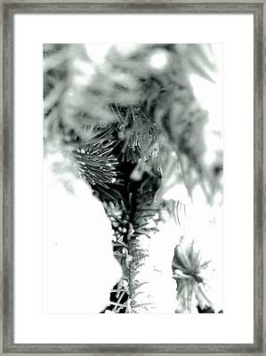 Iced Needles Buried In Snow Framed Print by Suzanne Fenster