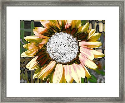 Iced Oatmeal Cookie Sunflower Framed Print by Devalyn Marshall