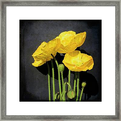 Iceland Yellow Poppies Framed Print