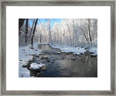 Icing On The Trees Framed Print by Sandy Tracey