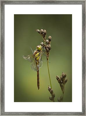 Icon Of Summer Framed Print by Andy Astbury