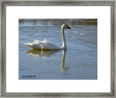 Framed Print featuring the photograph Icy Chill by Brian Stevens