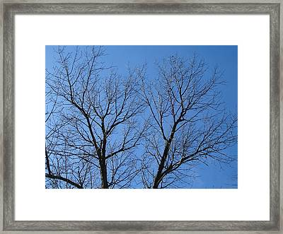 Icy Lace Framed Print by Suzanne Fenster