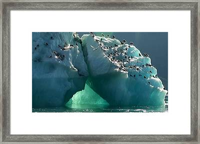 Icy Perch Framed Print by Susan Stephenson