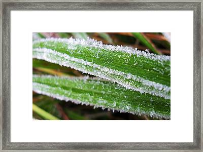 Icy Stripes Framed Print