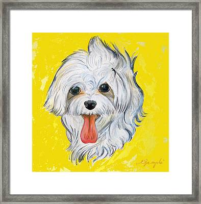 Icy The Maltese Framed Print by Ann Marie Napoli