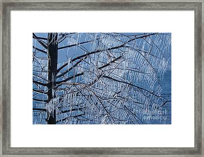Framed Print featuring the photograph Icy Tree by Charles Lupica