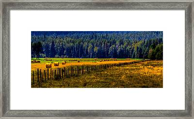 Idaho Hay Bales  Framed Print by David Patterson