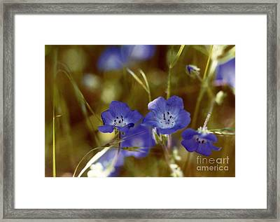 Framed Print featuring the photograph Idyllwild Baby Blue Eyes by Johanne Peale