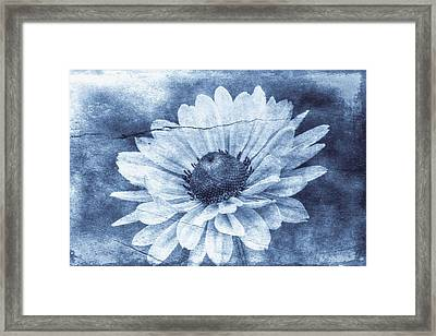 If Daisies Wore Blue Jeans Framed Print by Christine Annas