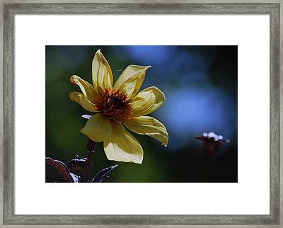 Framed Print featuring the photograph If I Could Paint by Amee Cave