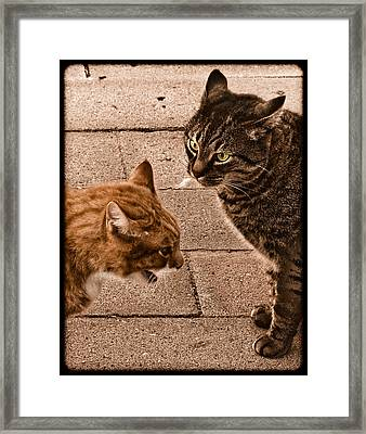 Albuquerque, New Mexico - If Looks Could Kill Framed Print