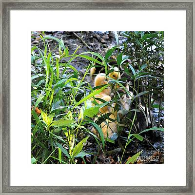 If We Are Quiet Framed Print by Lorraine Louwerse