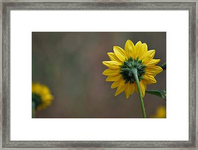 Framed Print featuring the photograph Ignoring You by Amee Cave