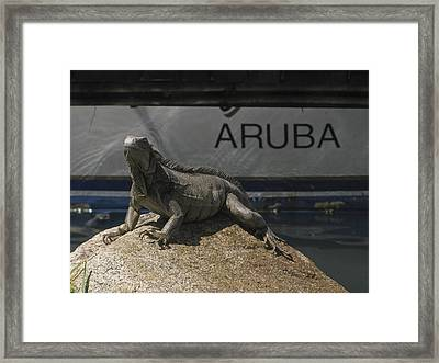 Framed Print featuring the photograph Iguana by David Gleeson