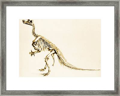 Iguanodon Mesozoic Dinosaur Framed Print by Science Source