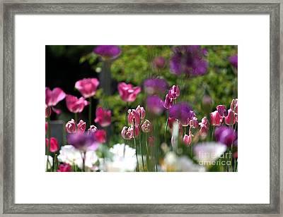 iIn the Garden Framed Print by Billie-Jo Miller