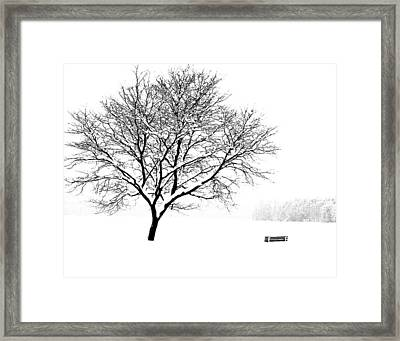 I'll Cover You Friend Framed Print by Jim McDonald Photography