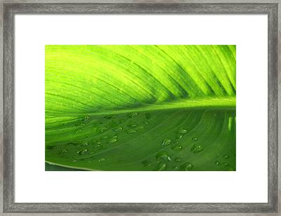 Illuminate Framed Print by Angela Hansen