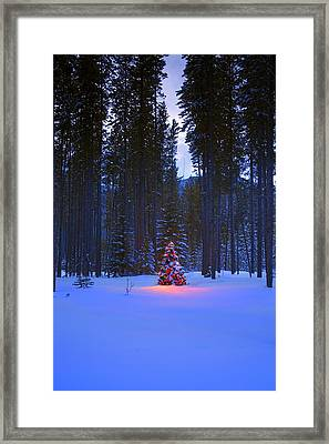 Illuminated Christmas Tree In The Woods Framed Print by Carson Ganci