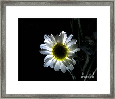 Illuminated Daisy Photograph Framed Print