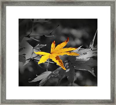 Illuminated Leaf Framed Print by Mikki Cucuzzo