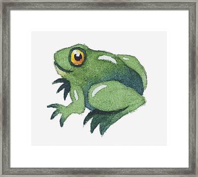 Illustration Of A Frog Framed Print