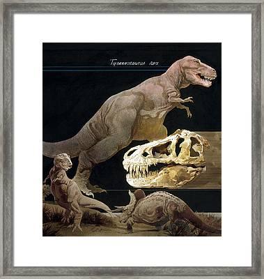 Illustration Of Tyrannosaurus Rex Framed Print