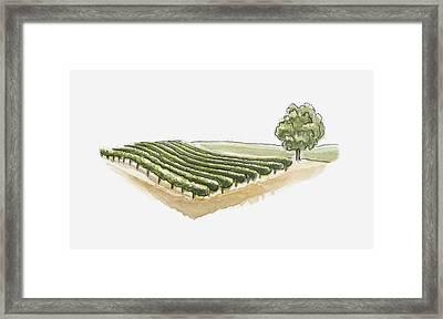Illustration Of Vineyard At Saint-emilion, Gironde, France Framed Print