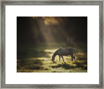 Ilumination Framed Print by Ron  McGinnis