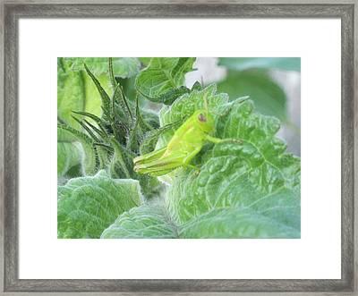 I'm A I'm A I'm A Chameleon Framed Print by Tracy Fallstrom
