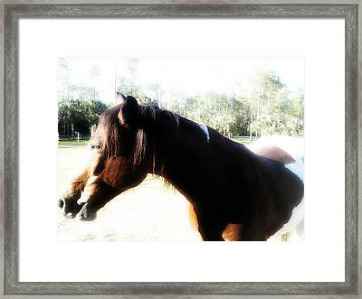 Im Not Looking Framed Print by Chasity Johnson
