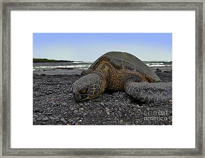 I'm Tired Framed Print by David Taylor
