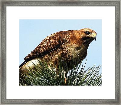 I'm Watching You Framed Print by Don Mann