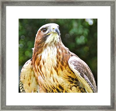 Im Watching You. Framed Print by Karen Grist
