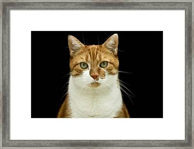 Framed Print featuring the photograph I'm Watching You by Nick Mares
